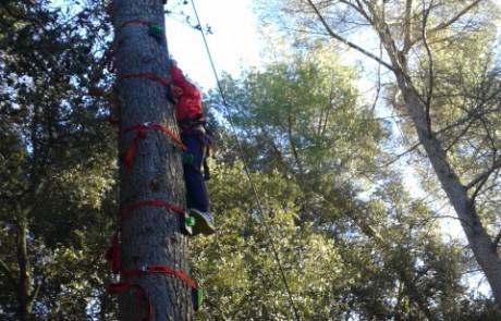 escalada arbres